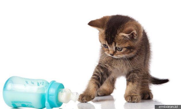 Cara Memelihara Kucing