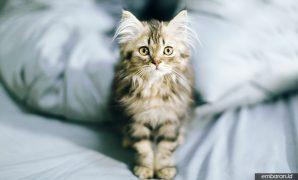 Cara Merawat Anak Kucing Tanpa Induk