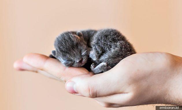 Cara Merawat Bayi Kucing