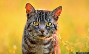 Cara Merawat Kucing Kampung
