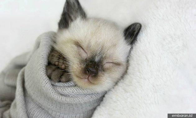 Cara Merawat Kucing Kecil