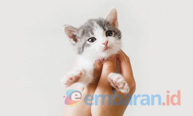 Cara Merawat Kucing Kecil dengan Baik dan Benar