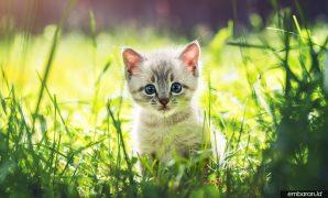Cara Merawat Anak Kucing Baru Lahir