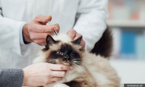 Harga Vaksin Kucing