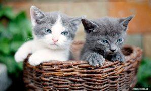 Makanan Anak Kucing Umur 1 Bulan