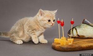 Makanan Kucing Umur 1 Bulan
