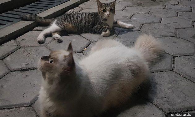 Cara Membedakan Kucing Betina dan Jantan