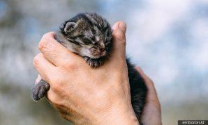 Cara Merawat Anak Kucing Kampung