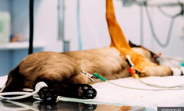 Ciri-Ciri Kucing Keracunan