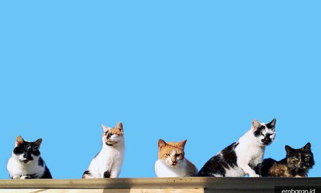 Karakteristik Kucing