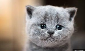 Kenapa Mata Kucing Berair