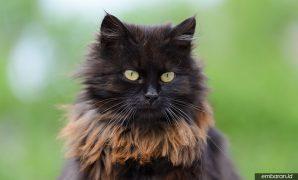 Kucing Mixdom