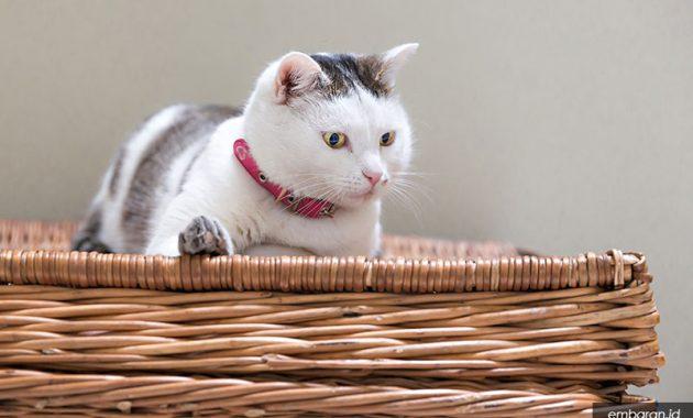 Nama untuk Kucing Perempuan
