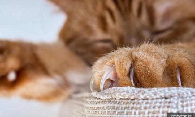 Kucing garfield