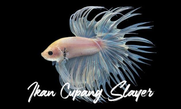 Ikan Cupang Slayer